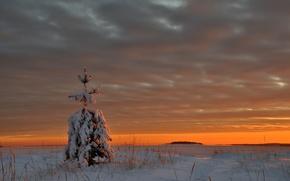 Обои тучи, снег, лед, зима, вечер, озеро, елка, закат