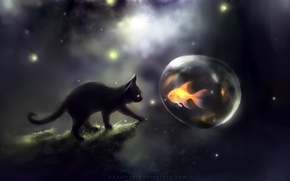 Обои пузырь, апофис, apofiss, кот