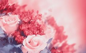 Картинка листья, цветы, розовая, розы, лепестки, бутоны, цветение, pink, flowers, leaves, petals, roses, blossoms, buds