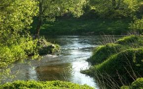 Картинка зелень, лето, трава, деревья, река, Германия, Бавария, Regenstauf