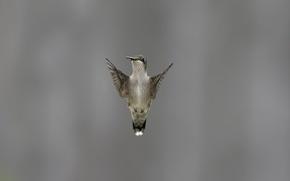 Картинка фон, крылья, птичка, взмах