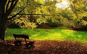 Обои скамейка, листва, Осень, деревья