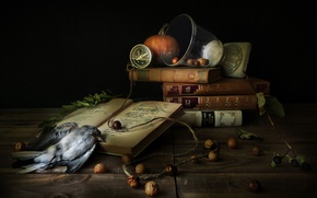Картинка птица, книги, компас