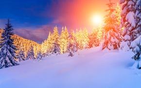 Картинка зима, лес, солнце, снег, горы, тучи, ели