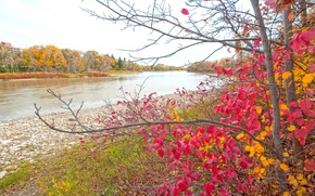 Картинка осень, лес, листья, деревья, пруд, парк, река, краски, багрянец