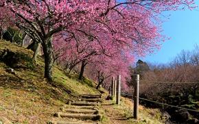 Картинка небо, забор, весна, Япония, сад, сакура, склон, ступени