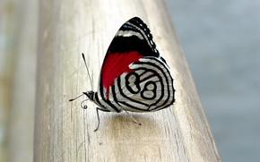 Картинка рисунок, Бабочка
