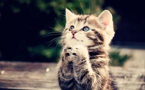 Обои бедолага, попрошайка, лапки, котенок, кот