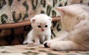 Картинка кошка, кот, котенок, хорошенький