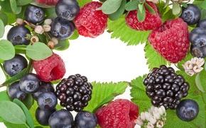 Обои цветы, ягоды, малина, ежевика, черника, листья
