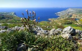 Картинка море, небо, камни, скалы, растение, залив, Мальта