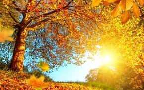 Обои лес, осень, золотая, солнце, желтые, листья, ветки, деревья, опушка