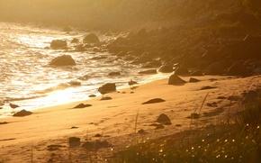 Картинка море, пляж, птицы, утро