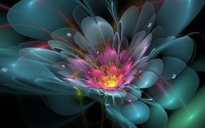 Обои цветок,  лепестки,  линии,  капли