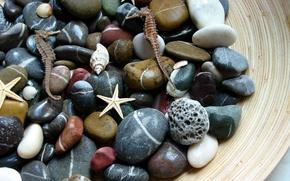 Обои макро, морские, камни