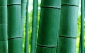 Картинка макро, природа, бамбук, ствол