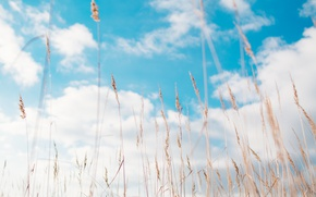 Картинка Небо, Природа, Облака, Трава