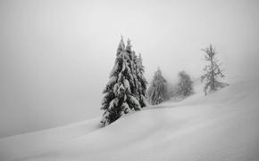Картинка зима, снег, деревья, природа, елки