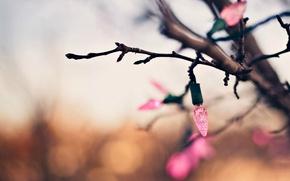 Картинка макро, фон, дерево, розовый, праздник, обои, размытие, ветка, огоньки, wallpaper, гирлянда, широкоформатные, background, боке, полноэкранные, …