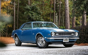 Картинка Chevrolet, Camaro, Blue, 1968, z28, Classicб whiteб stripes