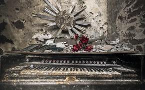 Картинка цветы, фон, орган