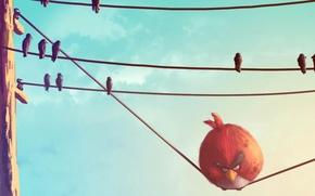 Обои птицы, провода, красная, Angry Birds, злые птички