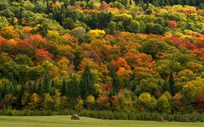 Картинка поле, осень, лес, деревья, природа, сено