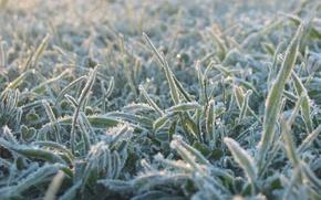 Обои иний, трава, холод