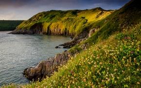 Картинка море, цветы, камни, скалы, берег, Великобритания, Three Cliffs Bay, Gower Peninsula