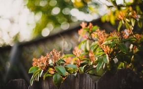 Картинка листья, цветы, забор, куст