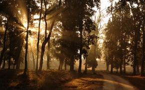 Обои утро, лучи, свет, природа, дорога, окраина, солнце, лес