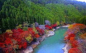 Картинка осень, деревья, Река, берега, Япония.
