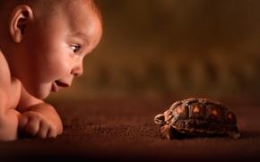 Картинка взгляд, ребёнок, любопытство, черепаха