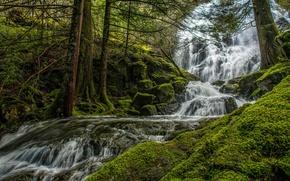 Картинка зелень, лес, деревья, ручей, камни, течение, водопад, мох, Канада, Mary Vine Creek