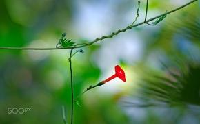 Обои розмытия, цветок, ростение, красный