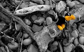 Обои черно-белая, цвет, Камни, ветки, игрушка