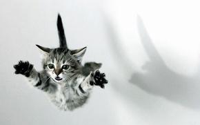 Картинка полет, котенок, лапы, шок