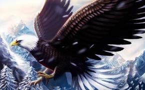 Картинка холод, зима, снег, полет, горы, птица, орел, крылья, клюв, живопись