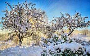 Картинка зима, снег, деревья, утро, срлнце