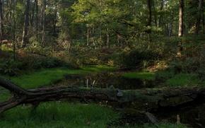 Обои пейзаж, озеро, река