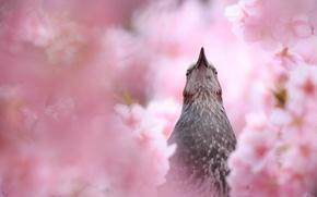 Обои лето, цветение, птица, природа