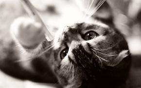 Картинка кошка, кот, котенок, животное, kitten, cat, animal