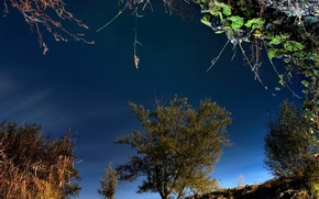 Картинка трава, деревья, отражение