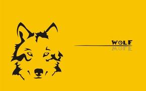 Обои желтый, волк, wolf
