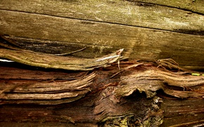 Обои сук, материал, волокна, древесина