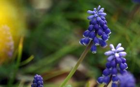 Картинка цветы, растение, луг