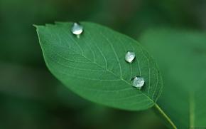 Картинка капли, растение, листик, зелёный