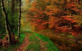 Обои river, hdr, leaves, листья, вода, trees, walk, осень, река, лес, forest, природа, прогулка, деревья, autumn, ...