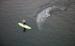 Картинка океан, ситуация, кит, спортсмен, мужчина, доска