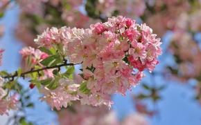 Картинка fresh, blossom, spring